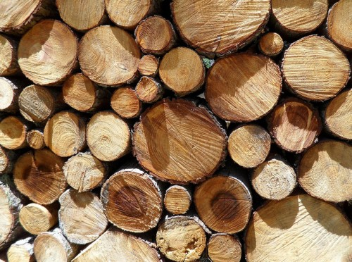 Logs Texture for Free
